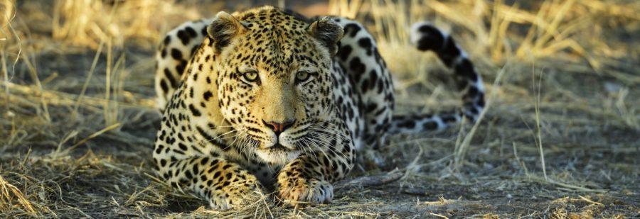 Wildnis Afrika: Live Foto-Film-Reportage von und mit Thomas Sbampato